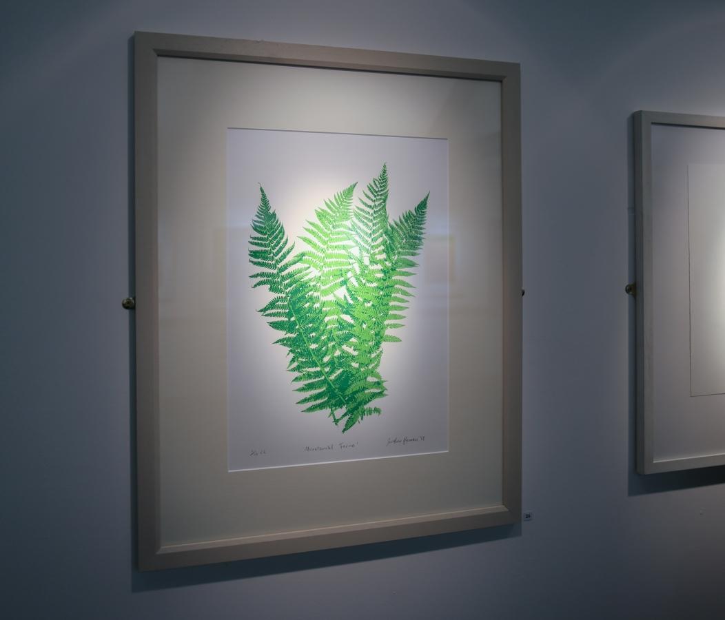 Mountsandel Ferns - screenprint on Madrid Litho © Jonathan Brennan 2018