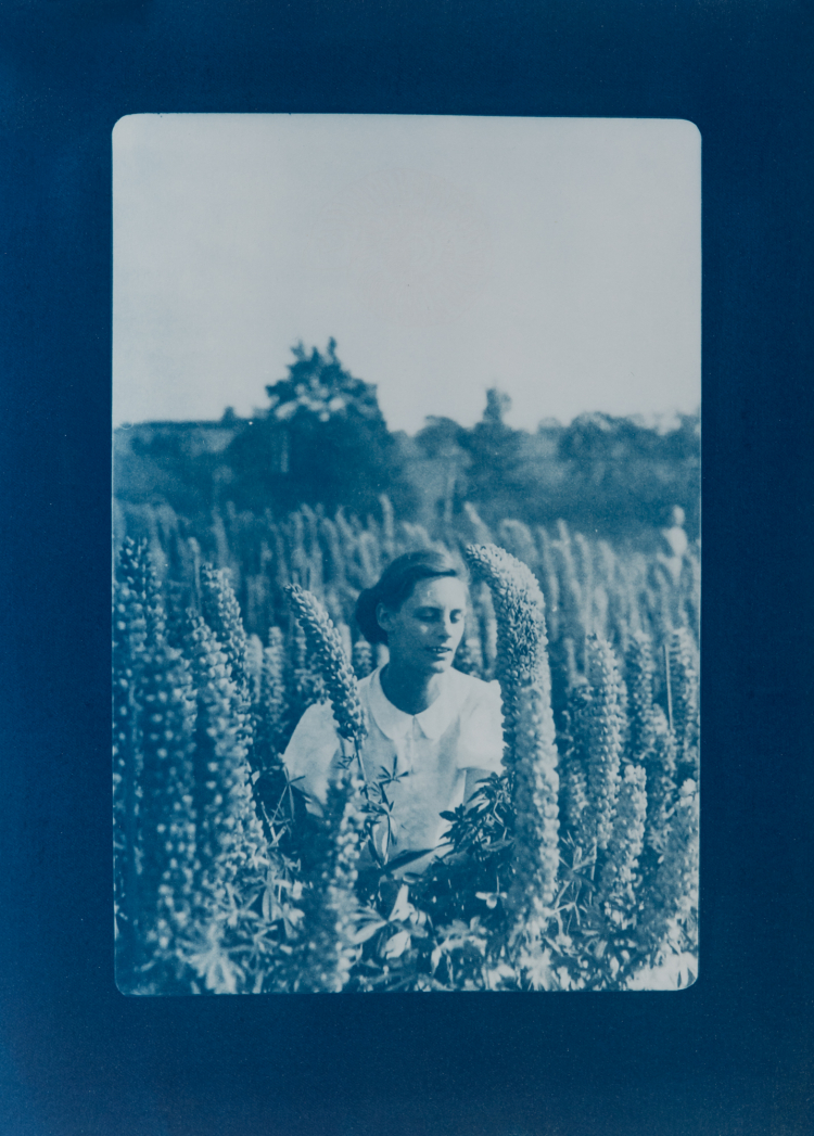 Lady of the lupins with ammonite. 1/4 V.E. Cyanotype and silkscreen on Fabriano © Jonathan Brennan, 2020