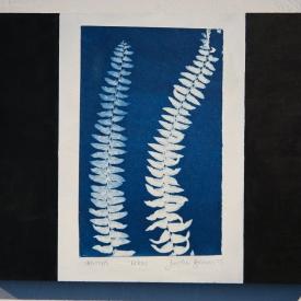 Nook of the Ferns. Cyanotype mounted on panel © Jonathan Brennan, 2019