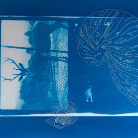 Go down to the woods. 1/4 V.E. Cyanotype and silkscreen on Fabriano © Jonathan Brennan, 2020